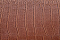 Brown crocodile skin texture background close up Stock Images
