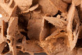 Brown desert rose mineral specimen in close up Royalty Free Stock Photography