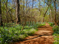 Brown Dirt Path in the Woods Royalty Free Stock Photo