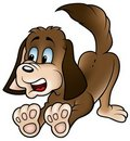 Brown Dog Stock Images
