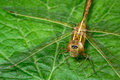 Brown dragonfly on leaf closeup head Royalty Free Stock Photography