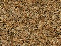 Brown dry pine needles background generated from real foto Stock Photography