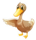 A brown duck illustration of on white background Stock Photos