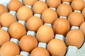 The brown eggs in egg box an Stock Photography
