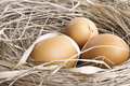 Brown eggs at hay nest in chicken farm Royalty Free Stock Photo