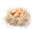 Brown eggs in a nest on a white background Royalty Free Stock Photos