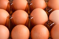 Brown eggs in tray horizontal on the full backgrpound close up Royalty Free Stock Photos