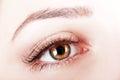 Brown eye Royalty Free Stock Photo