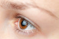 Brown eye side view close up Stock Photography