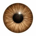 Brown eye texture