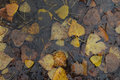 Autumn leaves rain water Royalty Free Stock Photo