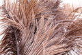 Brown feathers close up Stock Images