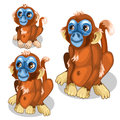 Brown funny monkey with blue face. Vector