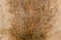 Brown furry fabric detail cloweup take of some cozy Stock Photo