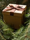 Brown giftbox surrounded by fir twigs Royalty Free Stock Image