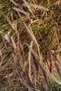 Brown grasses blowing in wind nature background Royalty Free Stock Photo