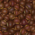 Brown hazelnuts seamless background Royalty Free Stock Photos