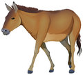 A brown horse illustration of on white background Stock Images