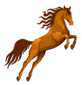 Brown horse jumping