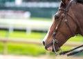 Brown Horse Licks Lips Royalty Free Stock Photo