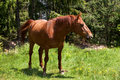 Brown horse on nature background Royalty Free Stock Images