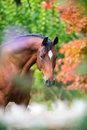 Brown horse portrait on colorful nature background Royalty Free Stock Photo