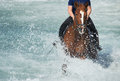 Brown horse running in the ocean Royalty Free Stock Photo