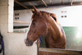 Brown horse in stable Royalty Free Stock Photo