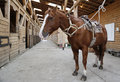 Brown horse in stable rigged with saddle and reins Royalty Free Stock Photo