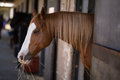 Brown horse at stable Royalty Free Stock Photo