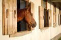 Brown horse stallion in the farm beautiful Stock Photography