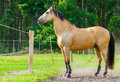 brown horse stands on a fence Royalty Free Stock Photo