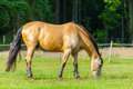 A brown horse stands on a fence Royalty Free Stock Photo