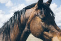 Brown Horse Under Cloudy Sky Stock Image