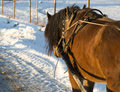 Brown Horse in Winter Royalty Free Stock Photo