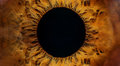 Brown human eye macro Royalty Free Stock Photo