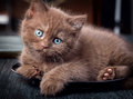 Brown kitten on black plate Royalty Free Stock Photo