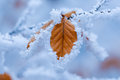 Brown leaf covered with frost and branch Stock Photo