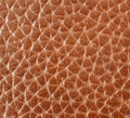 Brown leather background. Stock Image
