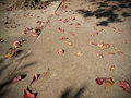 Brown leaves fall on the ground Royalty Free Stock Photo