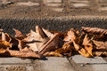 Brown leaves in fall. Leaves. Autumn leaves Royalty Free Stock Photo