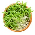 Brown millet microgreen in wooden bowl over white Royalty Free Stock Photo