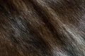 Brown mink fur background (diagonal texture) Stock Photos