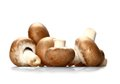 Brown mushrooms on white background soft focus close up Royalty Free Stock Photography