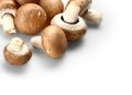 Brown mushrooms on white background top view Stock Photography