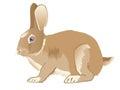 Brown nice hare