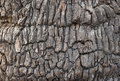 Brown oak bark Royalty Free Stock Image