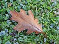 Brown oak leaf in frost Royalty Free Stock Photo