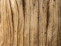 Brown old tree bark close up daylight wood texture Stock Photography