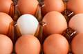 Brown and one white eggs in tray horizontal on the full backgrpound close up Stock Photo